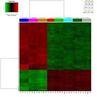 gene expression heatMap representation