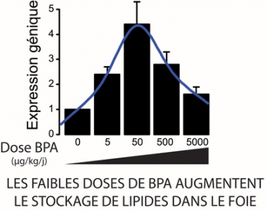 BPA - Foie