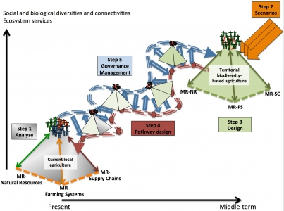 Article : Designing agroecological transitions