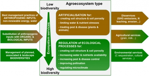Article : How to implement biodiversity-based agriculture to enhance ecosystem services