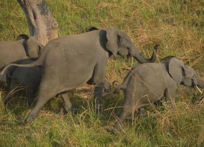 une-famille-d-elephants