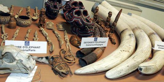 des-defenses-d-elephants-et-autres-objets